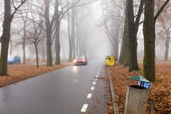 A car riding through an alley of large tall trees in autumn on a foggy morning Royalty Free Stock Images