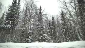 Car road covered by heavy snow in winter day, winter woods stock video footage