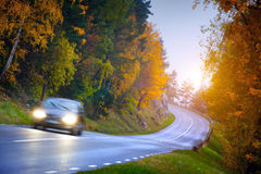 Car on the road in the fores Royalty Free Stock Image