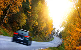 Car on the road in the fores Stock Photography