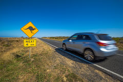 Australian kangaroo crossing Royalty Free Stock Photo