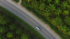 Car on the Road between Palm Oil Tree Plantation from above. Aerial HD birds eye view. Krabi, Thailand. stock video footage
