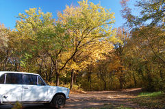 The car on a roadside. The car on picnic in autumn wood Stock Photography