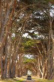 A car running through a cypress tree tunnel. Journey Stock Photos