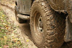 Car's wheels in mud in the forest Stock Image