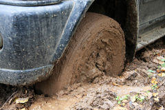 Car's wheel in mud in the forest Royalty Free Stock Image