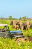 Car safari with elephants Royalty Free Stock Photography