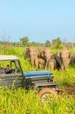 Car safari with elephants Royalty Free Stock Photography