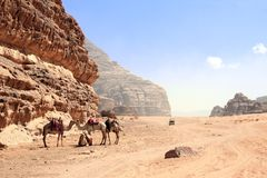 Car safari in Wadi Rum desert, Jordan. Camels and tourists in the car ride on off-road on sand among the beautiful rocks stock photography