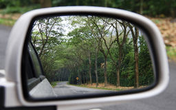 Car side mirror reflection tree alley. The reflection from the car side mirror, the view of tree and tar road royalty free stock photo