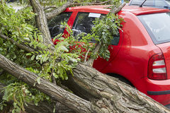Car smashed by high winds Stock Photography