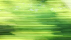 Car speeding on a road through green forest - side window blurred motion view. Color footage taken from a car speeding on a road through green forest - side stock video footage