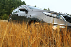 Car in a summer field Royalty Free Stock Photos