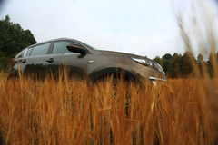 Car in a summer field Stock Photo