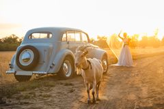A car at sunset with a goat in the foreground and a bride. In the background Stock Images