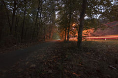 Car tail light trails in beautiful autumn colored forest. Cars comming towards me giving the forest a special light royalty free stock photos