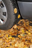A car tire in the autumn. A car tire on wet leaves in autumn Royalty Free Stock Images