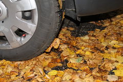 A car tire in the autumn. A car tire on wet leaves in autumn Stock Photo