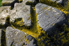 Car tire overgrown with moss. An old abandoned car tire overgrown with yellow moss stock photo