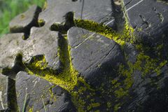 Car tire overgrown with moss. An old abandoned car tire overgrown with yellow moss stock photos
