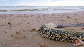 Car tire thrown by waves on the sandy shore during a storm. Tyre covered with sea shells. Pollution on the coast. Sea sand beach with waves after storm stock video
