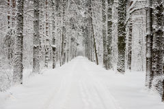 Car tire tracks on winter road Stock Photos