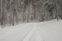Car tire tracks on winter road Stock Photo