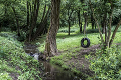 Car tire used as swing on tree forest near creek stream Concept photo of childhood nostalgia memory retro vintage. Car tire used as swing on a tree in the forest Royalty Free Stock Photography