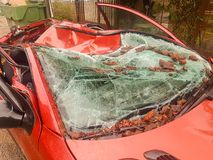 Car totally destroyed by a tree after storm. Royalty Free Stock Image