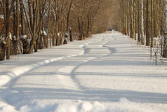 Car traces on the snow Stock Photography
