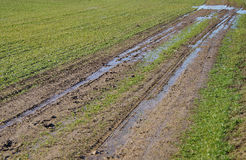 Car tracks in a field Stock Photos