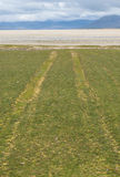 Car tracks on a grass field leading to a white beach Royalty Free Stock Photo