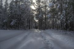 Car tracks after small snowy forest road in wintertime Royalty Free Stock Photo