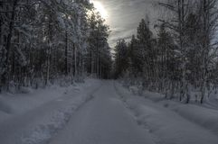 Car tracks after small snowy forest road in wintertime Stock Images