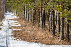 The car trail is disappearing on a melting snow road. The car trail is disappearing on a melting spring road snow near the forest edge Stock Photography