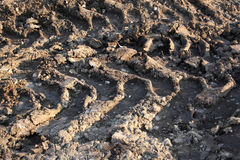 Car trails on mud Royalty Free Stock Photography