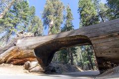 Car Tunnel in Large Sequioa Tree. Sequioa National Park in central California USA in November stock photos