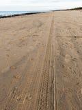 Car tyre tracks on the beach sand Stock Image