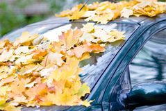 The car under leaves Stock Photo