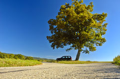 Car under a tree. A tree, towering over a car in the open countryside. Space for copy in the sky Stock Image