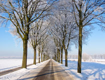 Car view snow landscape with a lane of trees. Nice car view of road with blue snow landscape with lane of trees Royalty Free Stock Photo