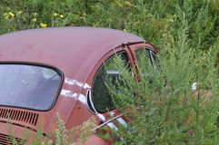 Car in the weeds Stock Images