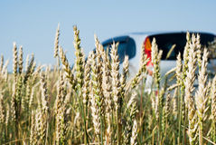 Car in Wheat. Car in the wheat field, a small depth of field Stock Photos