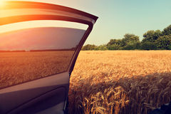 Car in wheat field with opened door Royalty Free Stock Image