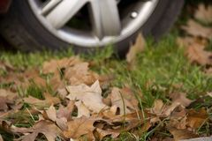 Car wheel. Car whell on grass Stock Images