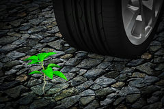 Car wheel next to  small green plant on stone Royalty Free Stock Image