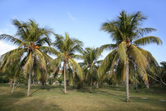 Caraïbisch Eiland royalty-vrije stock afbeeldingen