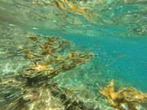Caraïbisch koraal met vissen en bezinningen royalty-vrije stock foto