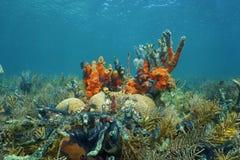 Caraïbisch koraalrif onderwater in Panama royalty-vrije stock afbeeldingen