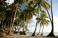 Caraïbisch Landschap stock afbeelding